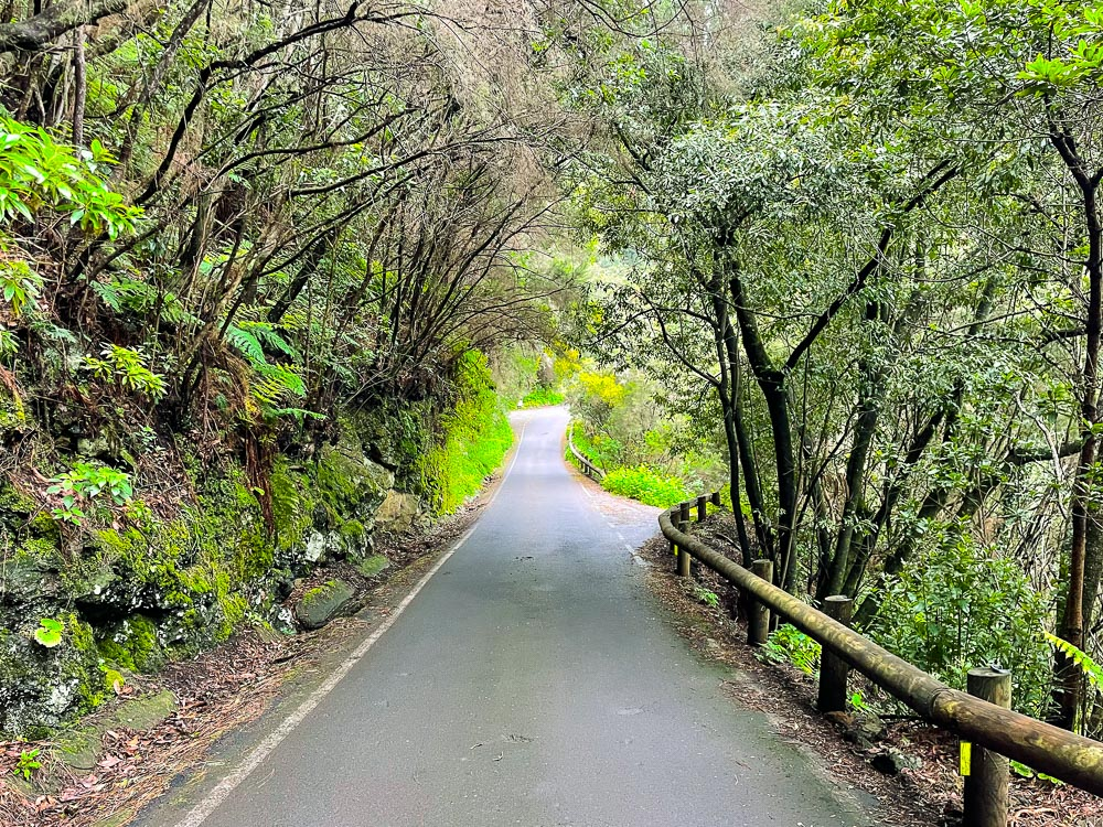 Scenic road with laurel forest